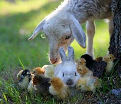 hobby farm animals