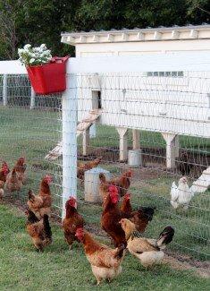 hobby farm living